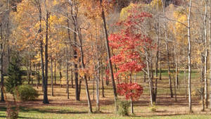 Fall's Gleem by Bestestcat