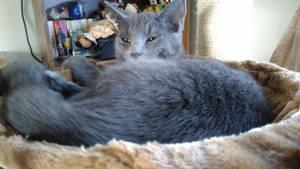 Not a Morning Cat by Bestestcat