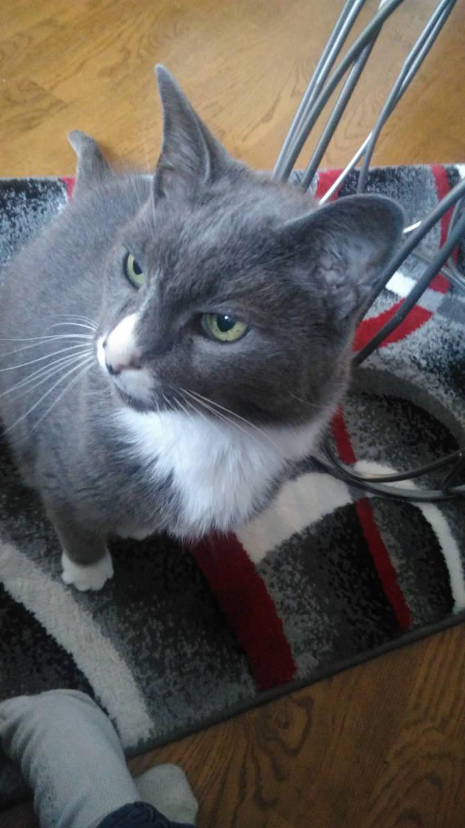 Random Cat by Bestestcat