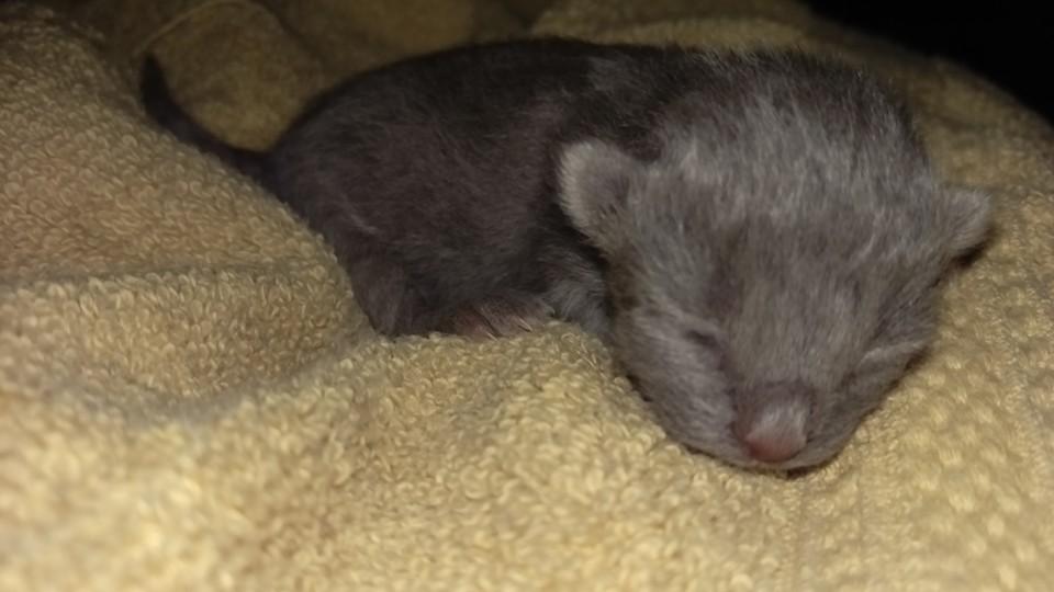 Newborn Graycee by Bestestcat