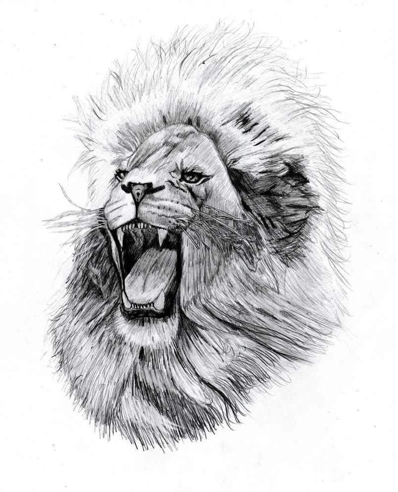 A Lion's Roar by OscarChavez