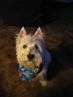 Winston. by doglover43