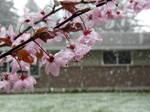 Spring Snow by doglover43