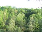 tree line met sky line
