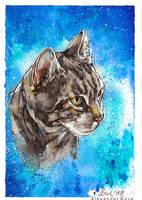 tomcat by MrBonecracker