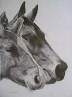 Horses by adrianwells