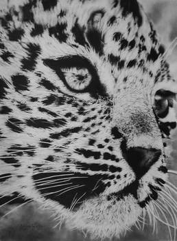 Young Leopard Close Up