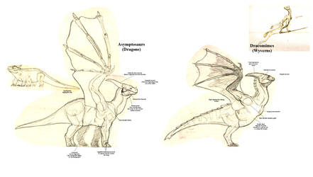 Tarkaria: How to tell Dragons apart from Wyverns