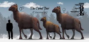 TMHOTW: The Camel Deer