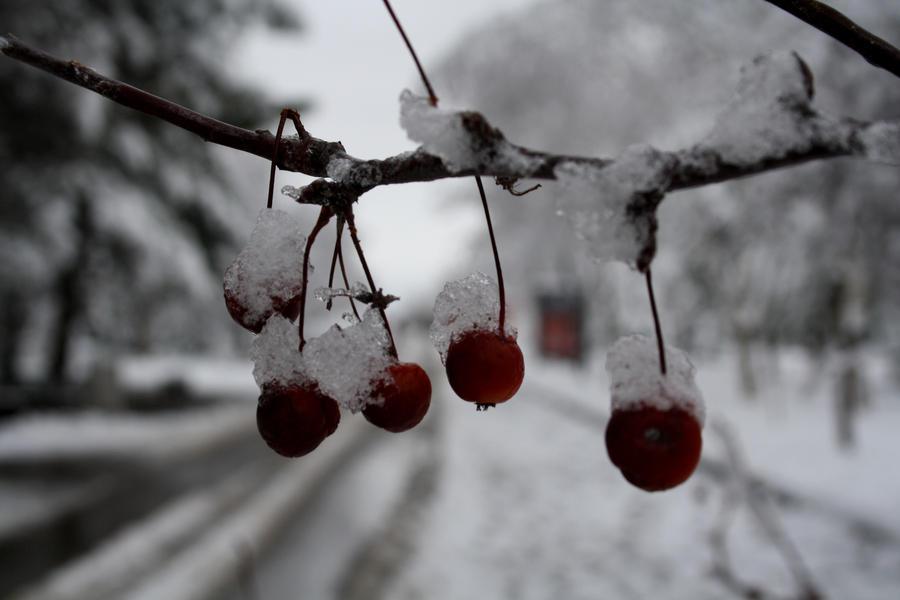 snow by esenyasemin