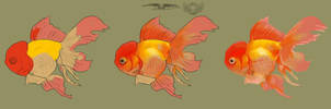 Gold fish painting progression