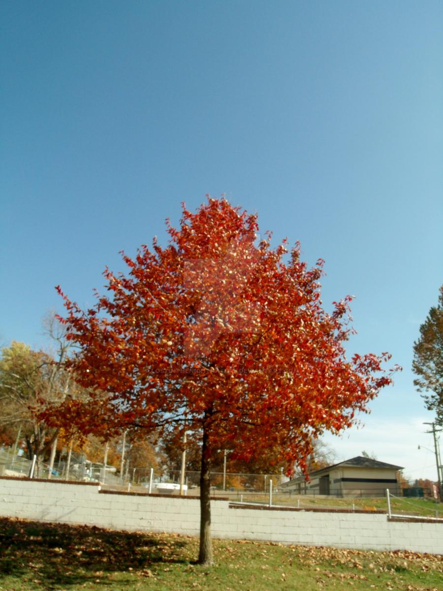 outcast tree by lostinthenightnature