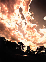 Magenta Sky by sangirose2