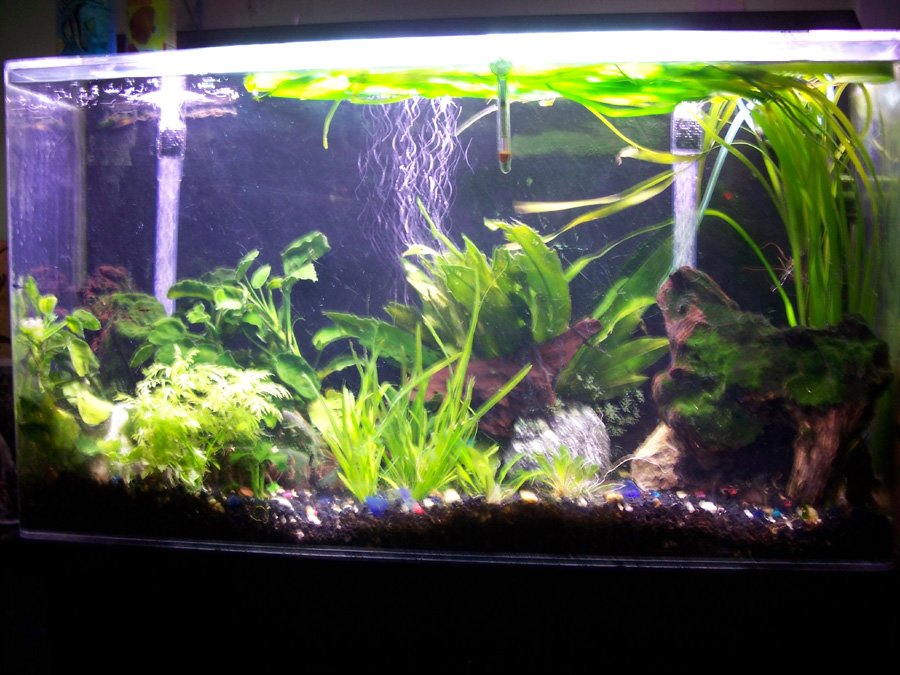 My planted fish tank by jupiterjenny on deviantart for Snap on fish tank