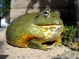 pixie frog 2 by jupiterjenny