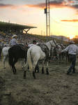 Rodeo shots 4