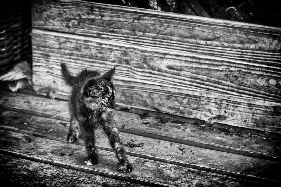 Strtching cat by DjMorex