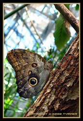 The eye of the butterfly