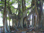 Fantasy banyan tree