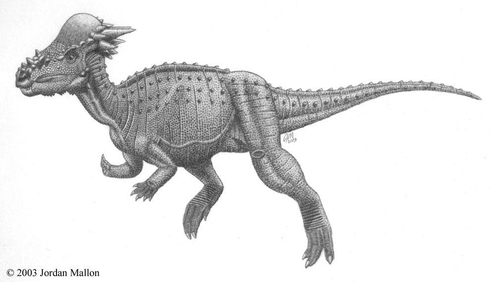 Sandy Creek pachycephalosaur by jslice