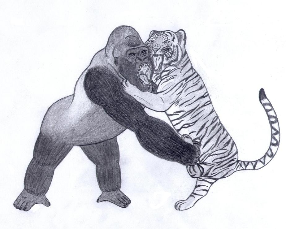 Tiger vs Gorilla by Joe09Art on DeviantArt