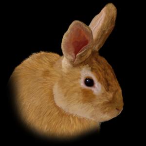 fuzzybuttbunny's Profile Picture