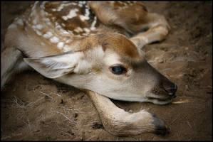 Newborn deer by Triumfa