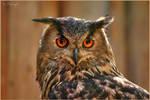 Sad owl by Triumfa