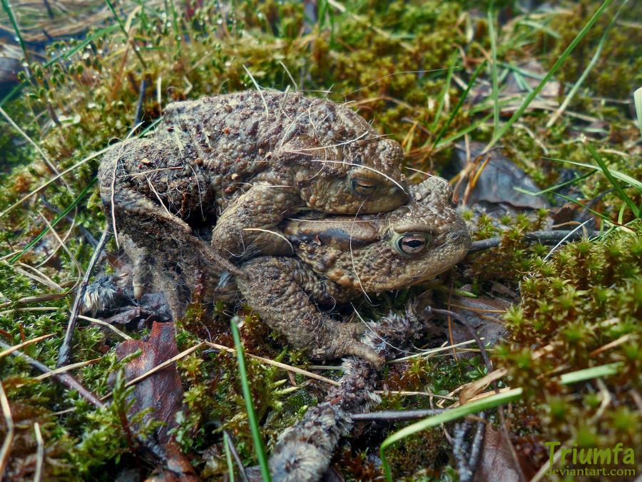 Toad love by Triumfa