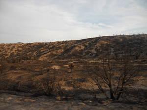 Vacation Pic: Fire Damage on  Mt Charleston