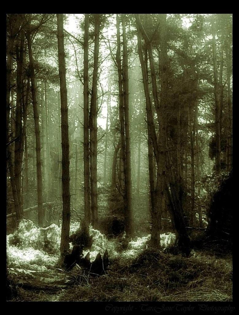 Sacred Light by Forestina-Fotos