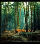 Forest Light - Colour Version