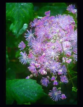 Nature's Own Bridal Bouquet