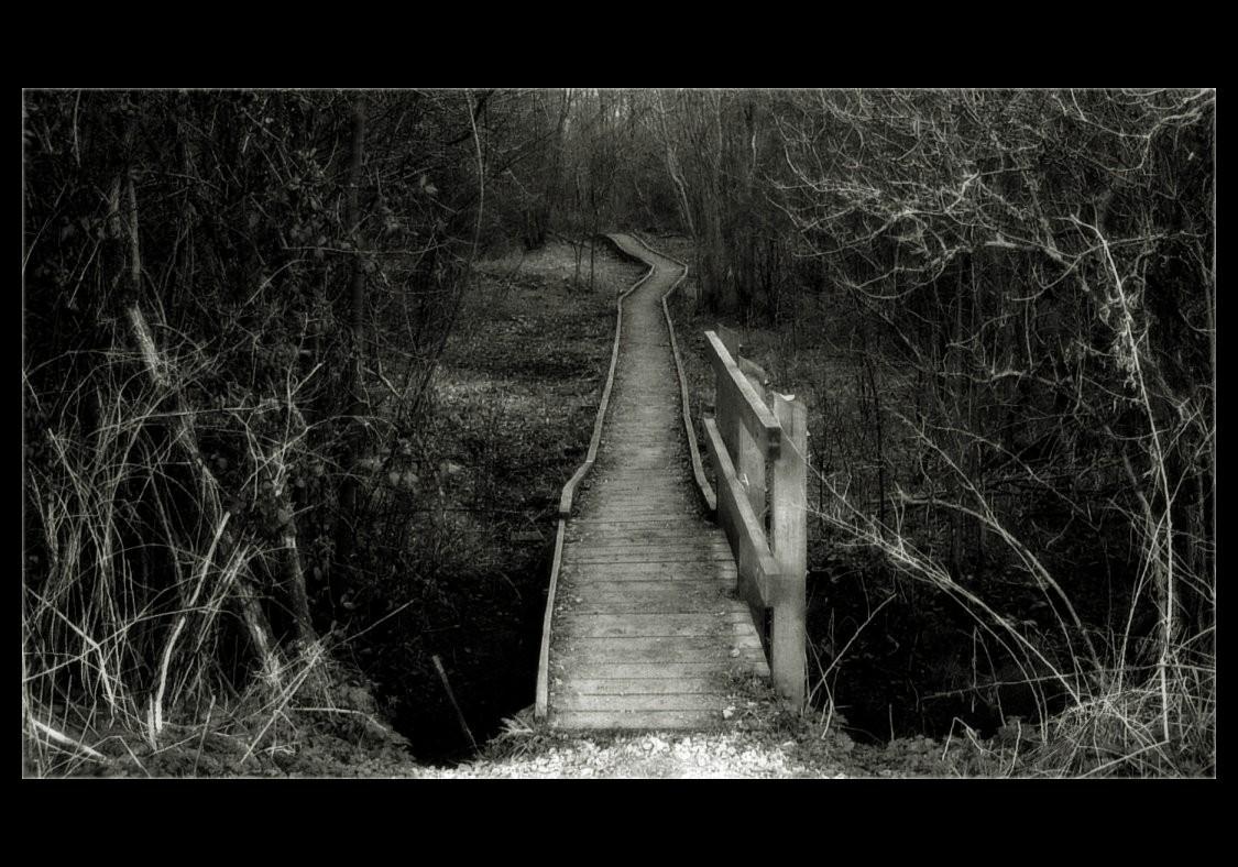 The Path Thru The Woods