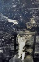 Victorian Kitten