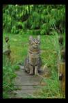 The Bridge Cat