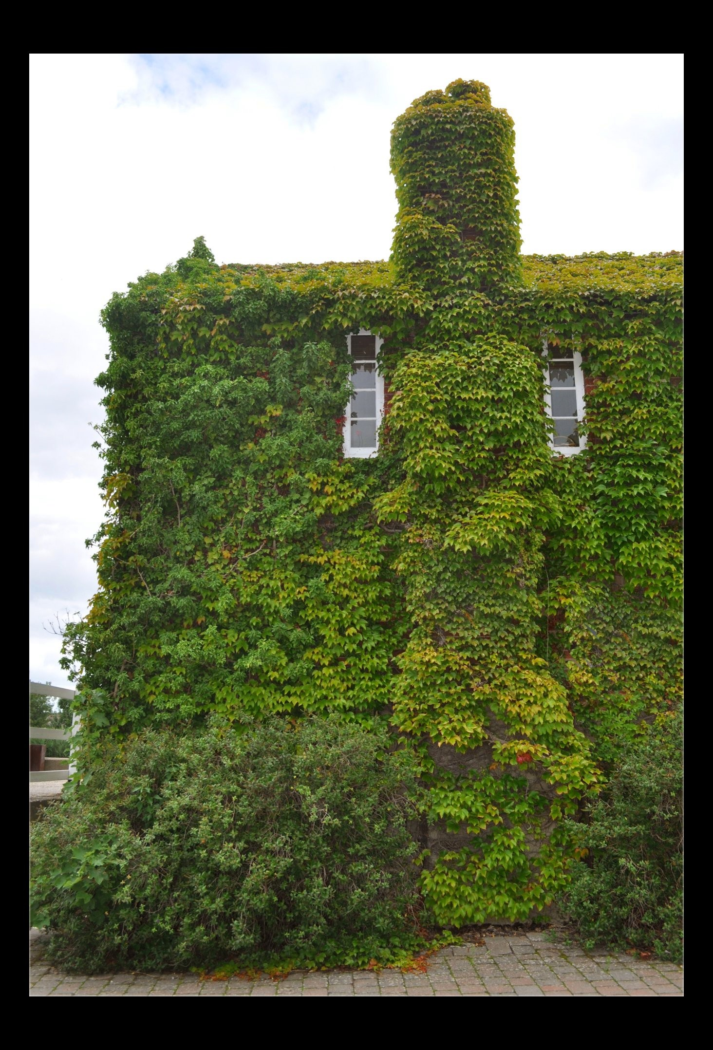The ivy house by forestina fotos on deviantart for The ivy house