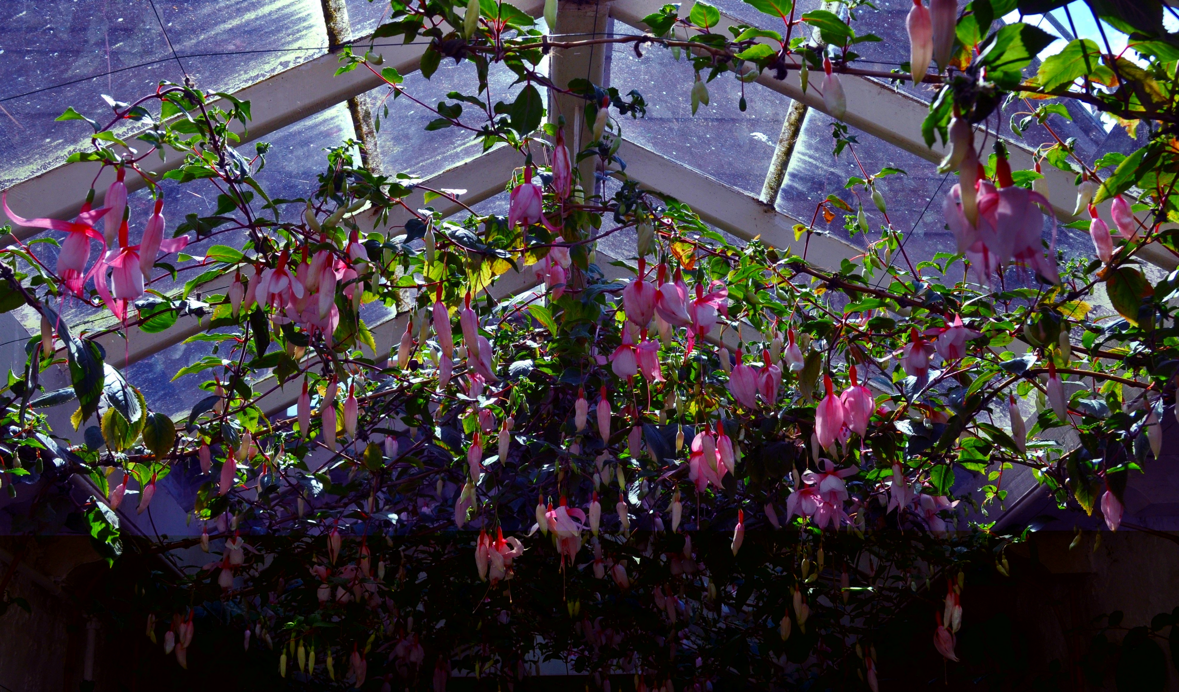 Hothouse Flowers at Night by Forestina Fotos on DeviantArt