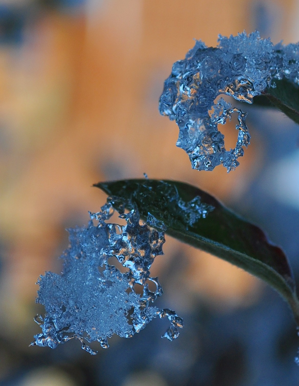 Ice Magic by Forestina-Fotos