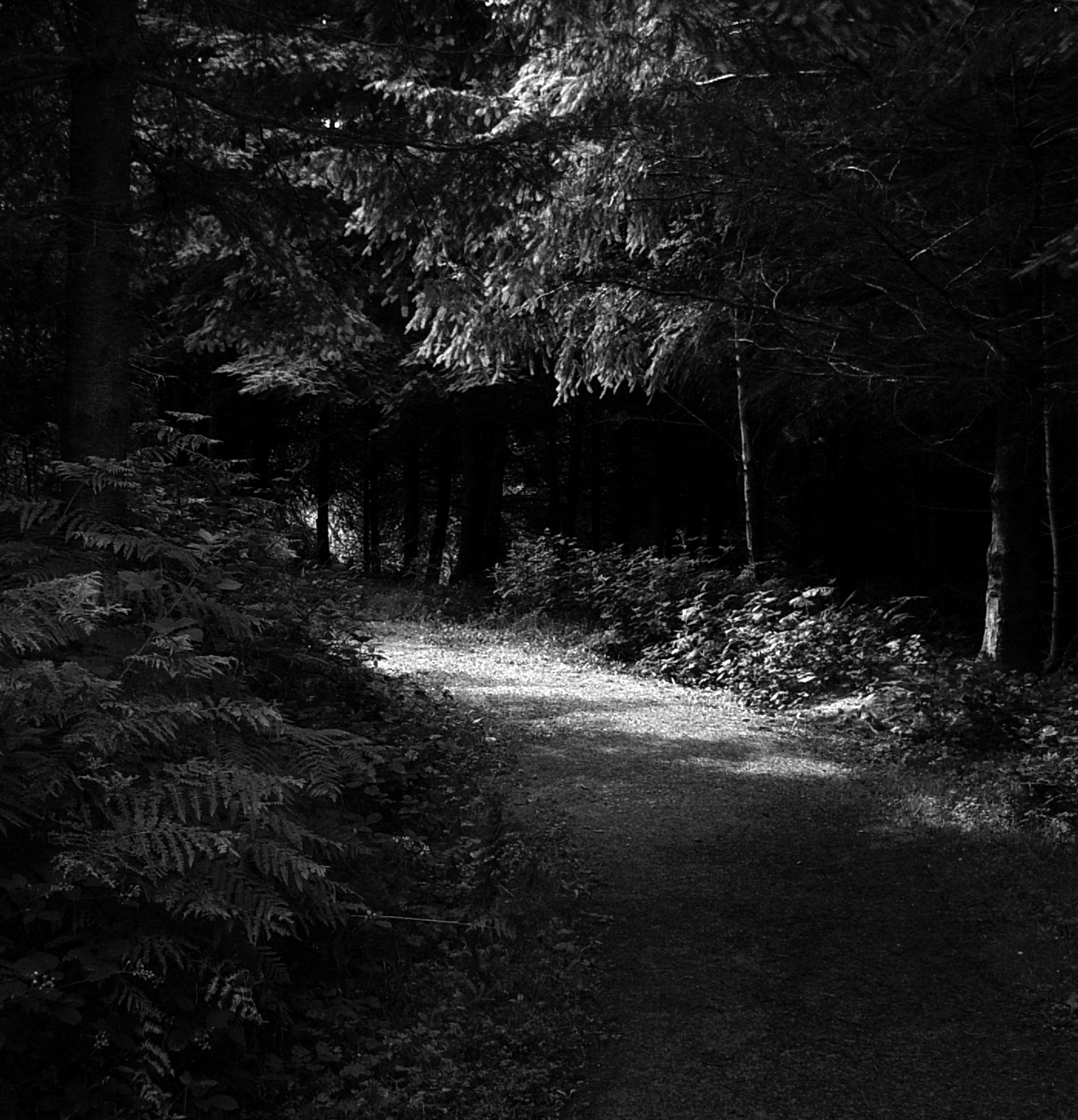 Step Into The Light And Let It Go: Step Into The Light By Forestina-Fotos On DeviantArt
