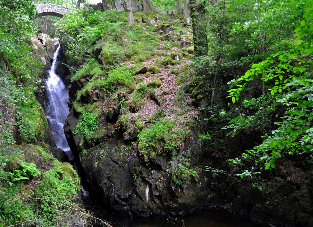 Cumbrian Gem by Forestina-Fotos