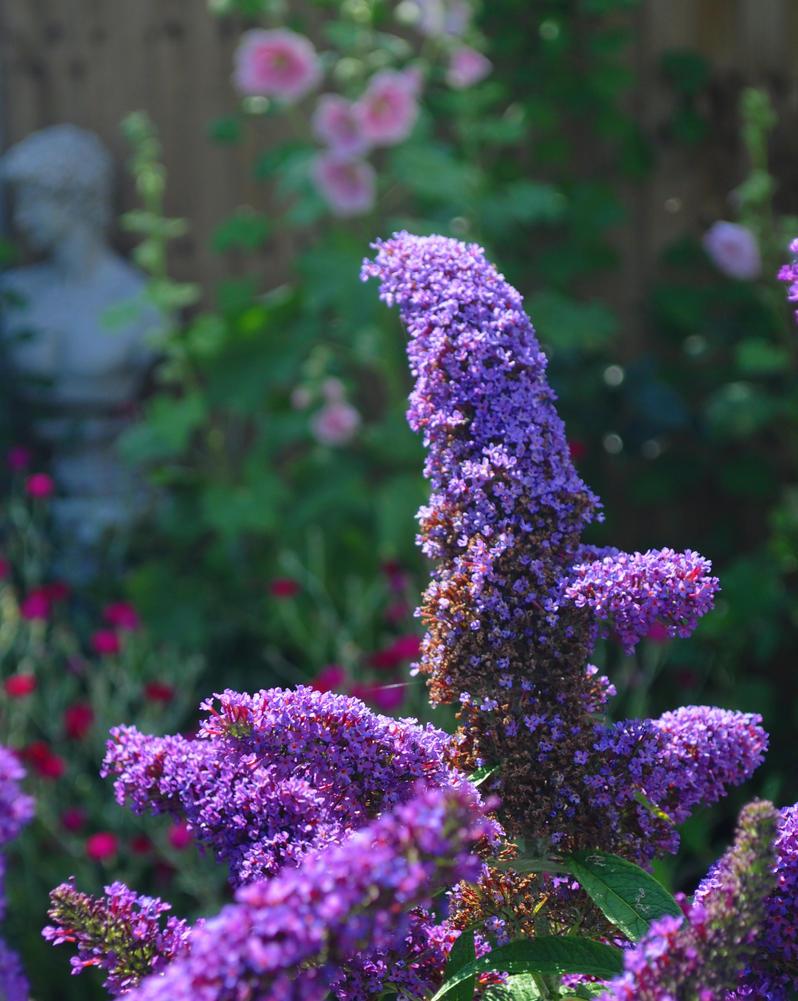 Lilac Dream by Forestina-Fotos