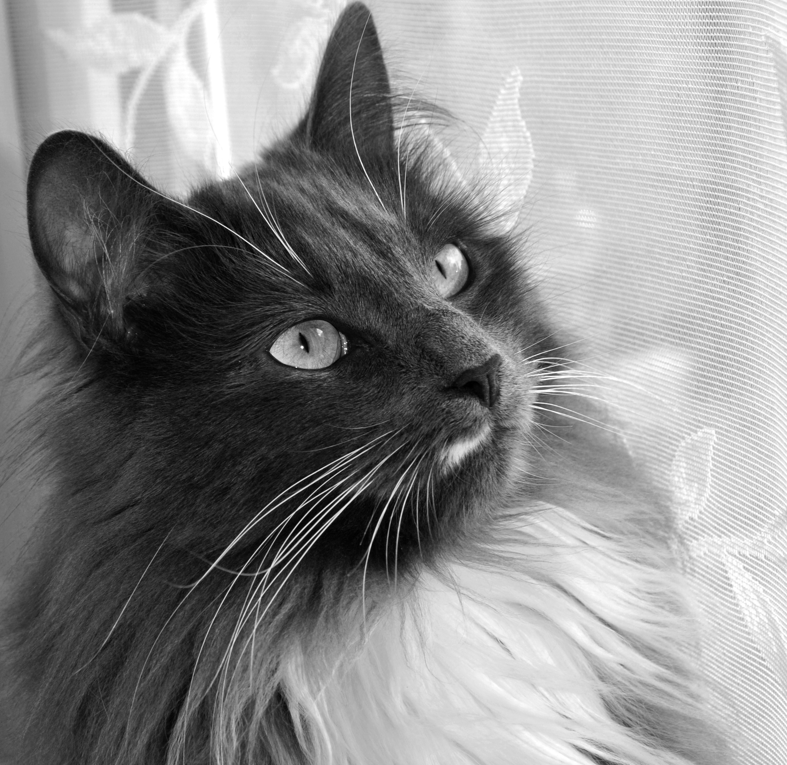 Loki On The Windowsill 4 by Forestina-Fotos