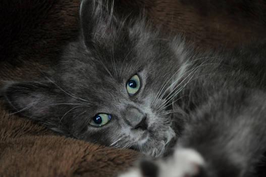 Kitten Loki