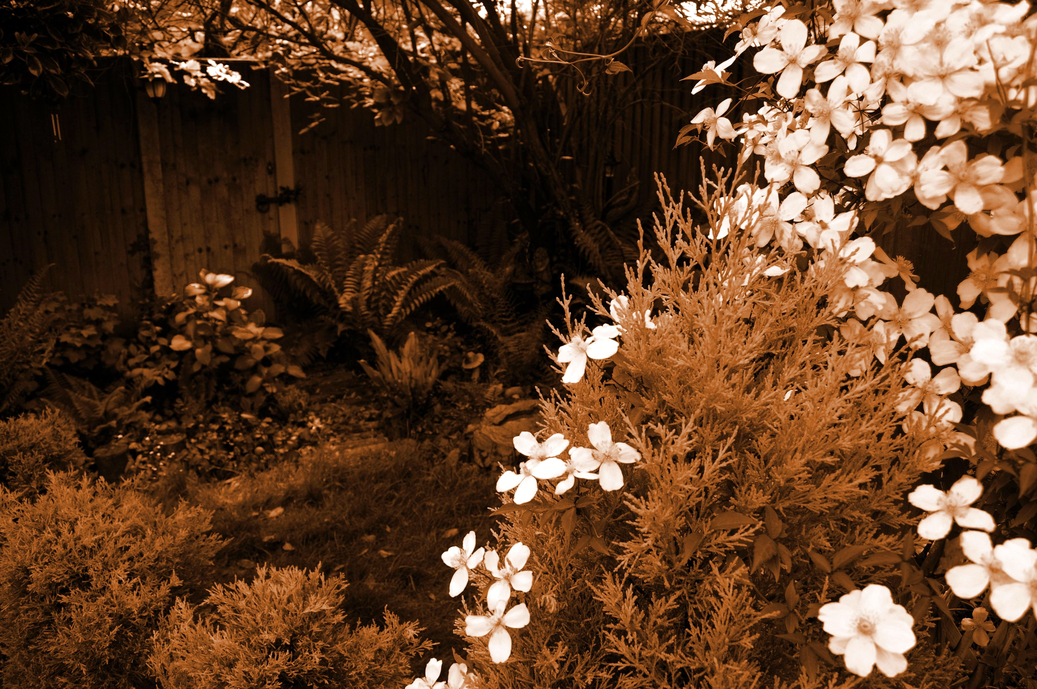 The Secret Garden by Forestina-Fotos on DeviantArt