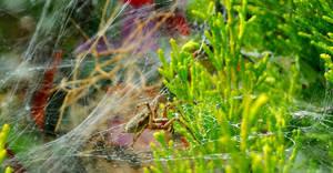 Spider Closer