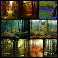 Collage - forests