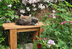 Loki On The Bench