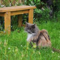Loki in the Garden 2
