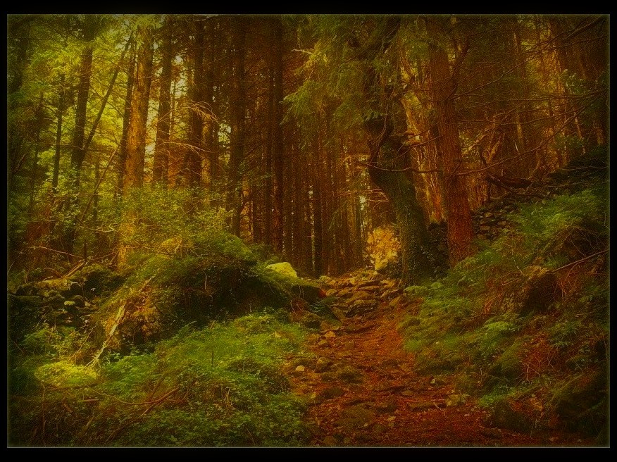 Deep Into The Forest by Forestina-Fotos